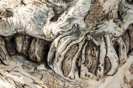 Baumrinde. Rinde eines alten Baumes