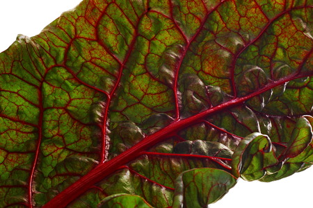 Beet leaf texture.  Leaf beet vitamin pantry. Ingredient for salad