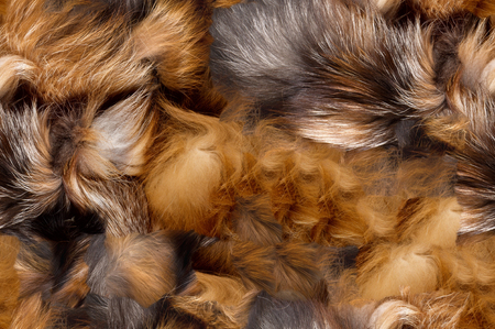 Texture, background, seamless pattern. This is useful for designers. Fox fur animal. Carnivorous mammals of the family. dog with long fluffy tail and his fur.