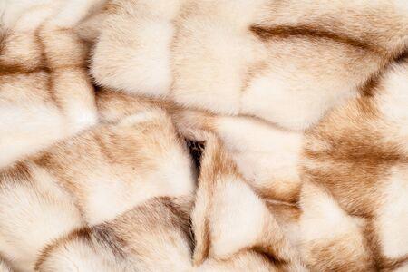visone: Coat of mink. Photography Studio