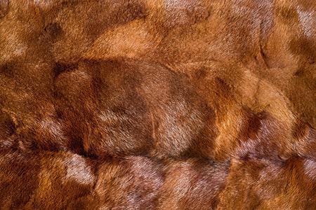 visone: texture, background. mink brown