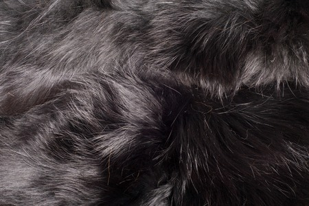 fur. The coat of the animal. The fur of the animal. texture Background Stock Photo