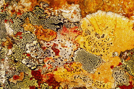 Texture of lichen on the stone. Rough Granite Stone Rock Background Texture. An old stone wall.