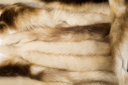 visone: Texture, background. Mink fur multicolored. mink tails Archivio Fotografico