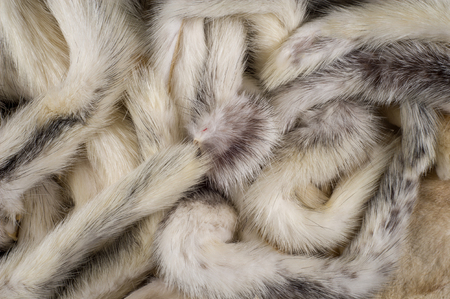 Texture, background. Mink fur multicolored. mink tails Stock Photo