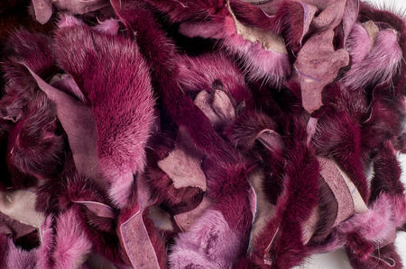 visone: Texture, background. Mink fur. Waste production. Small patches of mink