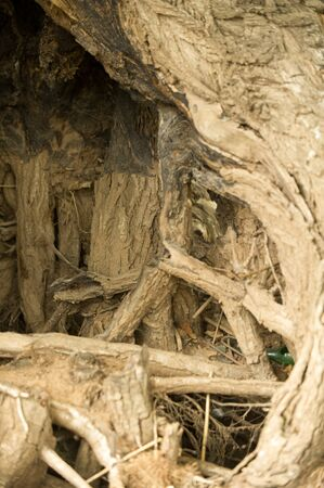 conservative: Texture, background. tree roots