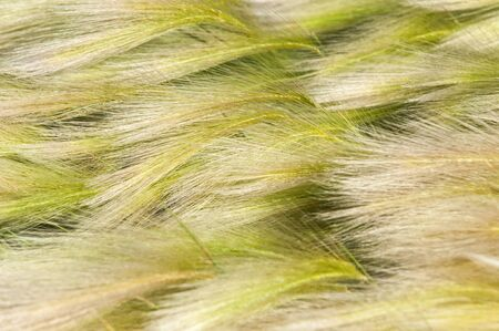 grew: feather grass, mat grass. feather grew up in the Kazakh steppe. texture