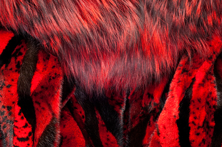 visone: texture. background. mink fur, painted in red color Archivio Fotografico