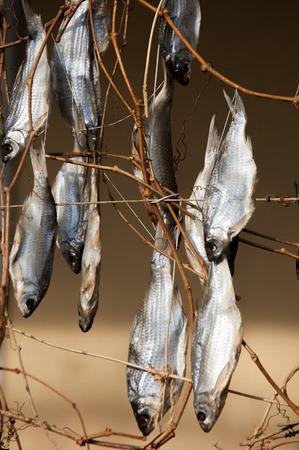 stockfish: Texture, background. Dried fish. stockfish. Norwegian traditional way of drying fish Stock Photo