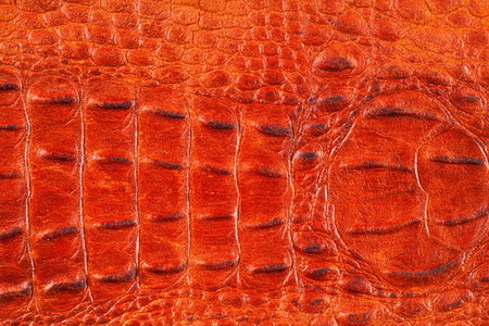 crocodile Skin. Artistic leather crocodile
