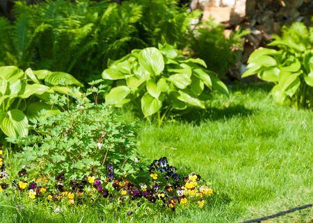 A flower garden is any garden where flowers are grown for decorative purposes