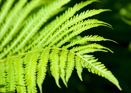 fern, brake. a flowerless plant that has feathery or leafy fronds and reproduces by spores released from the undersides of the fronds.