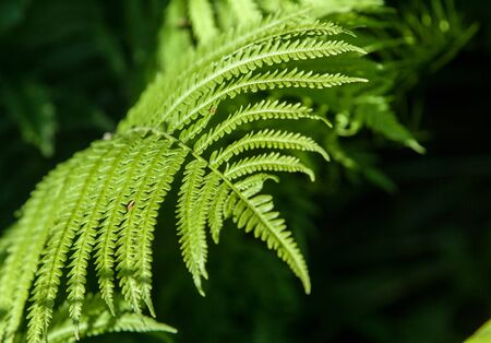 Fern. a flowerless plant that has feathery or leafy fronds and reproduces by spores released from the undersides of the fronds. Ferns have a vascular system for the transport of water and nutrients.