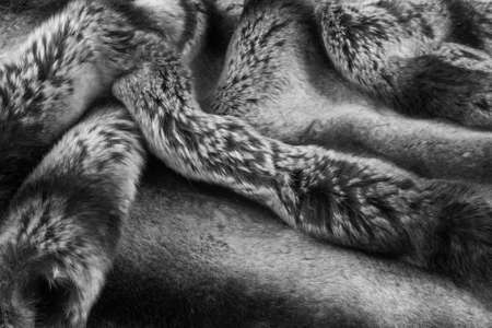 spotted fur: rabbit fur texture, background. a burrowing, gregarious, plant-eating mammal with long ears, long hind legs, and a short tail. Stock Photo