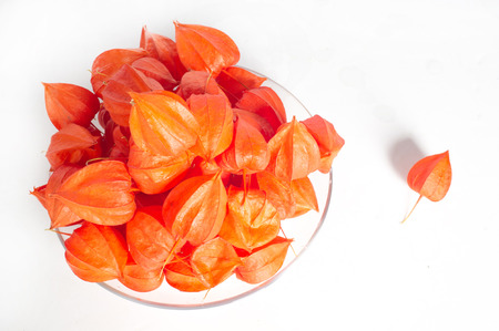 nightshade: Physalis (faɪsəlɪs, sometimes faɪˈseɪlɪs, from physalis = bladder) is a genus of flowering plants in the nightshade family (Solanaceae) Stock Photo