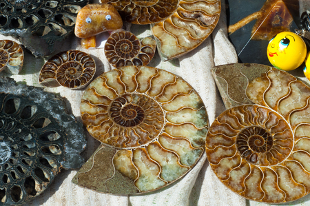 impression: Fossil remains of marine life. the remains or impression of a prehistoric organism preserved in petrified form or as a mold or cast in rock. Stock Photo