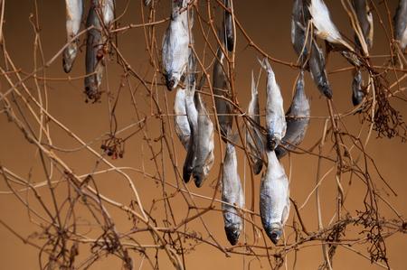 blue fish: Texture, background. Dried fish. stockfish. Norwegian traditional way of drying fish Stock Photo