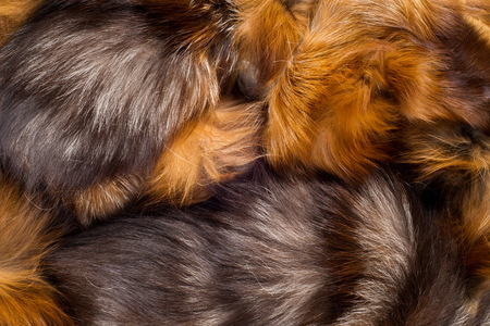 visone: Texture, background. Fur Fox. a carnivorous mammal of the dog family with a pointed muzzle and bushy tail, proverbial for its cunning. Archivio Fotografico