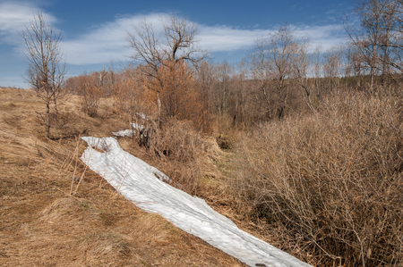 Spring landscape, the last snow in secluded places. Bright sun melts the snow. Green Pine. Deciduous trees without leaves. Melt water from the snow. Yellow last years grass. Stock Photo