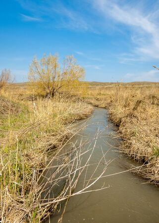 spring creek, on the shore of growing willow, Tien Shan foothills
