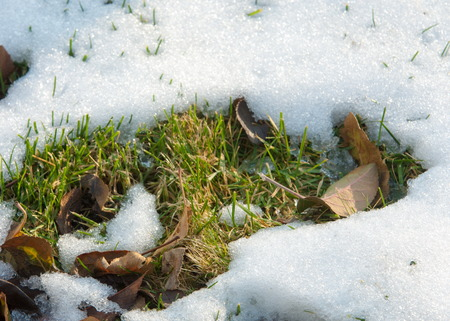 thawing: Spring slush. early spring background. some thawed snow in spring . Stock Photo