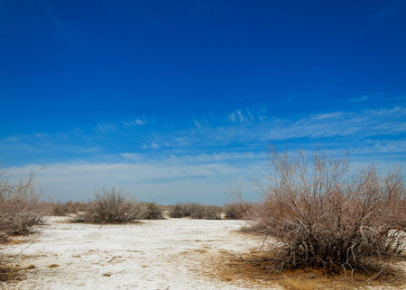 barrenness: saline, salt-marsh. Etosha badlands. single shrub. Kazakhstan