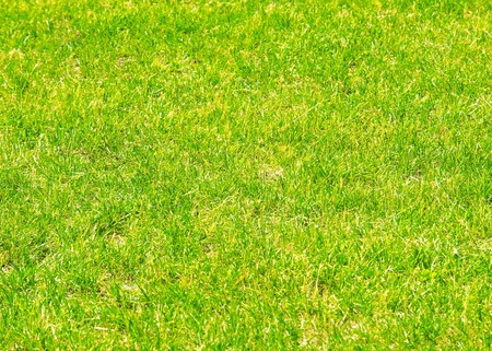 texture, background. Lawn trimmed. Manicured lawn green