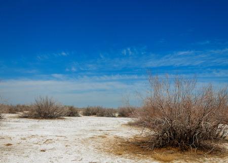 saline, salt-marsh. Etosha badlands. single shrub. Kazakhstan