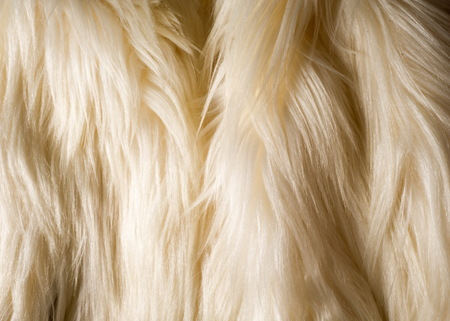 ox eye: texture, background. Fur white yak. a large domesticated wild ox with shaggy hair, humped shoulders, and large horns, used in Tibet as a pack animal and for its milk, meat, and hide. Stock Photo