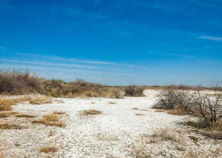 salinity: saline, salt-marsh. Etosha badlands. single shrub. Kazakhstan