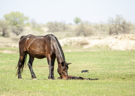 steppe, prairie, veld, veldt. Bright sunshine, spring in the desert. Horses grazing near the river Stock Photo