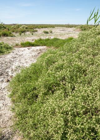dirt: Steppe saline soils. saline  salt  in salt.  steppe  prairie  veldt veld. Saline soils of the desert, salt lakes,.  lifeless scorched earth. bare steppe of Kazakhstan