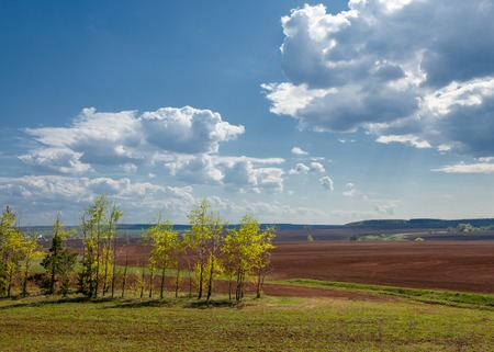 Field plowed, sown cereals. Plowed field in spring day. Black soil plowed field. Plowed field in the blue sky Stock Photo