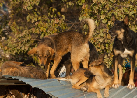 dog pack. assembled into a pack of dogs, life-threatening