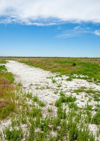 Steppe saline soils. saline  salt  in salt.  steppe  prairie  veldt veld. Saline soils of the desert, salt lakes,.  lifeless scorched earth. bare steppe of Kazakhstan