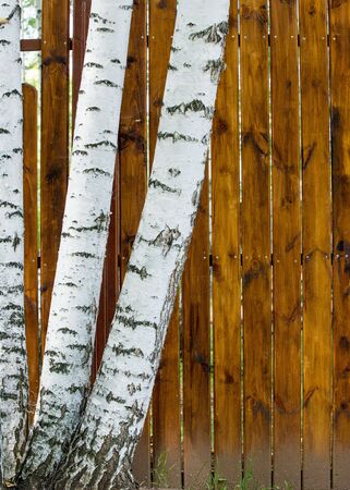 Texture of wood structure. Stock Photo