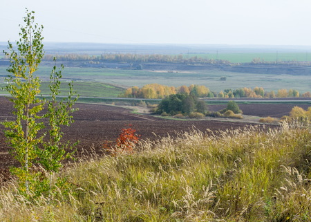 unusually: Autumn, Indian Summer. a period of unusually dry, warm weather occurring in late autumn. Arable land, birch, dry grass, Stock Photo