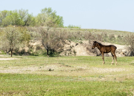 veldt: steppe, prairie, veld, veldt. Bright sunshine, spring in the desert. Horses grazing near the river Stock Photo