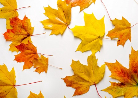 texture, background. Maple Leaves yellow shades of red and gold. Leaves abstract Laid for photos. the leaf of the maple, used as an emblem of Canada. Stock Photo