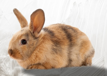 Easter bunny. an imaginary rabbit said to bring gifts to children at Easter. Stock Photo