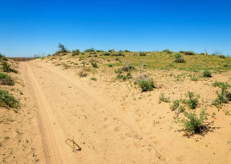scorching: Sands Desert Spring. spring under the scorching sun in the semi-desert sands bloom