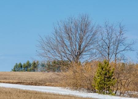 early spring grain stubble of mown old packed snow, streams of water. blue sky Stock Photo