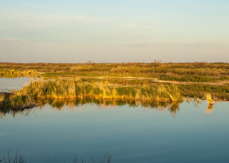 Small lake under nice sky. evening scene on lake in steppe, Landscape with bog in steppe in nice summer day.  summer scene on lake Stock Photo