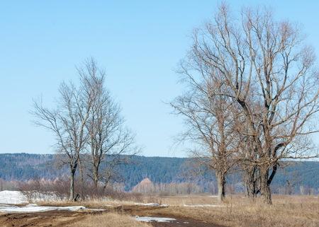 Spring last snow. The Trees