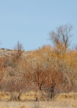 sand spring steppe. trees and sand on blue sky background. steppes of Kazakhstan