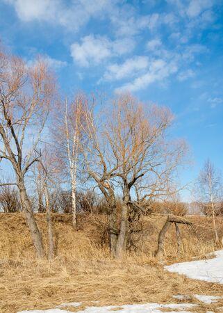 arboleda: Primavera en el bosque, la hierba marchita, la última nieve, cálido día de primavera, fondos de escritorio. Esta foto buena solución de diseño.