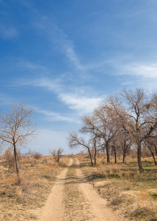 spring steppe. the nature wakes up after winter. last years grass with trees in the desert Stock Photo