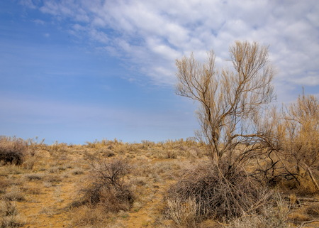 spring steppe. the nature wakes up after winter. last years grass with trees in the desert Imagens