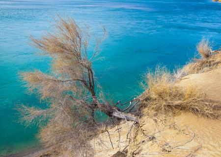 sand. spring. water. snow. Haloxylon. Central Asia,  Sinkiang,  Haloxylon ammodendron, Haloxylon persicum,  white saxaul, Stock Photo